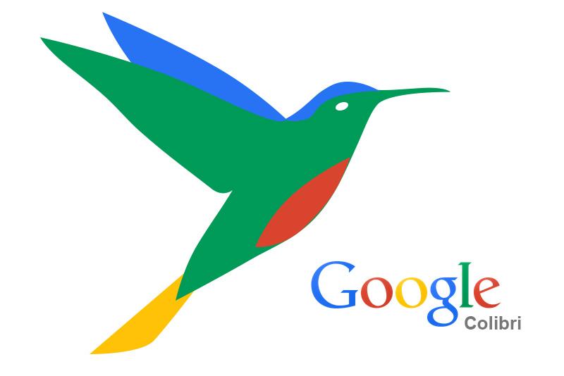 colibri google imagen